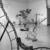 Nancy Graves: A Sculpture Retrospective, December 11, 1987 through February 29, 1988 (Image: PHO_E1987i112.jpg. Brooklyn Museum photograph, 1987)