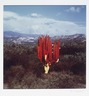Untitled (Cactus Painted Red/Yellow)