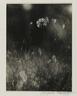 [Untitled] (Weeds)