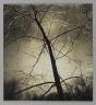 [Untitled] (Tree)