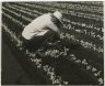 [Untitled] (Farm Worker, Florida)