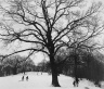 Winter �83 (Prospect Park)