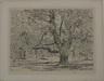 The Big Horse Chestnut Tree, Easthampton