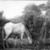Albert Pinkham Ryder (American, 1847-1917). The Grazing Horse, mid 1870s. Oil on canvas, 10 3/16 x 14 1/8 in. (25.8 x 35.8 cm). Brooklyn Museum, Augustus Graham School of Design Fund, 14.554 (Photo: Brooklyn Museum, 14.554_print_bw.jpg)