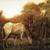 Albert Pinkham Ryder (American, 1847-1917). The Grazing Horse, mid 1870s. Oil on canvas, 10 3/16 x 14 1/8 in. (25.8 x 35.8 cm). Brooklyn Museum, Augustus Graham School of Design Fund, 14.554 (Photo: Brooklyn Museum, 14.554_transp200.jpg)