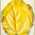Georgia O'Keeffe (American, 1887-1986). 2 Yellow Leaves (Yellow Leaves), 1928. Oil on canvas, 40 x 30 1/8 in. (101.6 x 76.5 cm). Brooklyn Museum, Bequest of Georgia O'Keeffe, 87.136.6. copyright transferred to Brooklyn Museum, 2006 (Photo: Brooklyn Museum, 87.136.6_SL1.jpg)