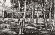 Brooklyn Museum: Trees