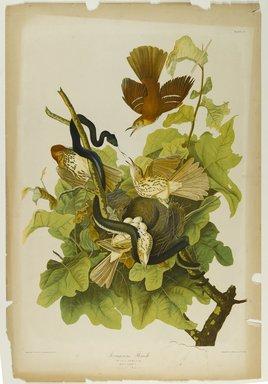 John J. Audubon (American, 1785-1851). Ferruginou's Thrush, 1861. Chromolithograph Brooklyn Museum, Gift of Seymour R. Husted Jr., 06.339.104