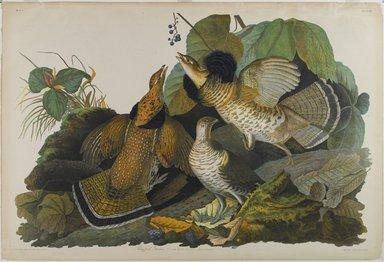 John James  Audubon (American, born Haiti, 1785-1851). Ruffed Grouse, 1861. Chromolithograph, sheet:  27 1/8 x 40 in.  (68.9 x 101.6 cm). Brooklyn Museum, Gift of Seymour R. Husted Jr., 06.339.28