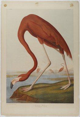 John J. Audubon (American, 1785-1851). American Flamingo, 1861. Chromolithograph, 27 x 39 3/4 in.  (68.6 x 101.0 cm). Brooklyn Museum, Gift of Seymour R. Husted Jr., 06.339.2