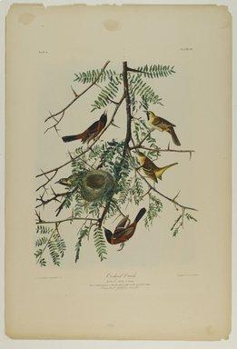John J. Audubon (American, 1785-1851). Orchard Oriole, 1861. Chromolithograph Brooklyn Museum, Gift of Seymour R. Husted Jr., 06.339.36