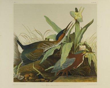 John J. Audubon (American, 1785-1851). Green Heron, 1861. Chromolithograph Brooklyn Museum, Gift of Seymour R. Husted Jr., 06.339.37