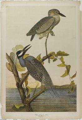 John James  Audubon (American, born Haiti, 1785-1851). Yellow-crowned Heron, 1861. Chromolithograph Brooklyn Museum, Gift of Seymour R. Husted Jr., 06.339.38