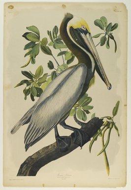 John J. Audubon (American, 1785-1851). Brown Pelican, 1861. Chromolithograph Brooklyn Museum, Gift of Seymour R. Husted Jr., 06.339.42