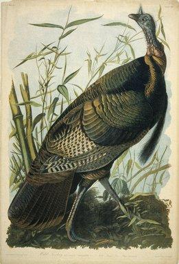 John J. Audubon (American, 1785-1851). Wild Turkey, 1861. Chromolithograph, 40 x 27 in.  (101.6 x 68.6 cm). Brooklyn Museum, Gift of Seymour R. Husted Jr., 06.339.64