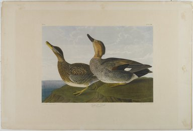 John J. Audubon (American, 1785-1851). Gadwall Duck, 1861. Lithograph, 16 x 23 1/2 in.  (40.6 x 59.7 cm). Brooklyn Museum, Gift of Seymour R. Husted Jr., 06.339.88