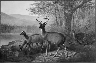 William Jacob Hays (American, 1830-1875). Landscape and Deer, ca. 1871. Oil on canvas, 16 15/16 x 26 in. (43.1 x 66 cm). Brooklyn Museum, Bequest of Caroline H. Polhemus, 06.78