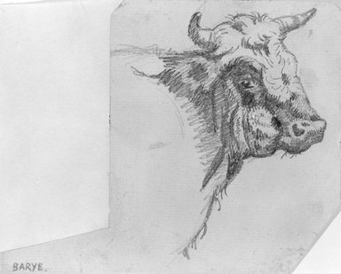 Antoine-Louis Barye (French, 1795-1875). Head of a Bull, n.d. Graphite on laid paper, Sheet: 4 1/4 x 5 1/4 in. (10.8 x 13.3 cm). Brooklyn Museum, Purchased by Special Subscription, 10.216