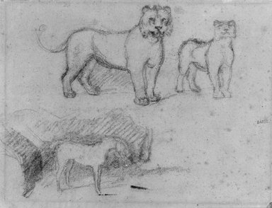 Two Standing Lionesses and a Horse