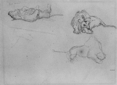 Antoine-Louis Barye (French, 1795-1875). Studies of a Lion, n.d. Drawing in graphite on heavy wove paper, Sheet: 8 5/8 x 11 3/8 in. (21.9 x 28.9 cm). Brooklyn Museum, Purchased by Special Subscription, 10.219