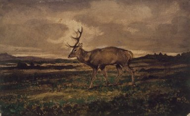 Antoine-Louis Barye (French, 1795-1875). Stag Walking (Cerf marchant), n.d. Watercolor and gouache on cream-colored wove paper, 5 1/2 x 9 in. (14 x 22.9 cm). Brooklyn Museum, Purchased by Special Subscription, 10.97