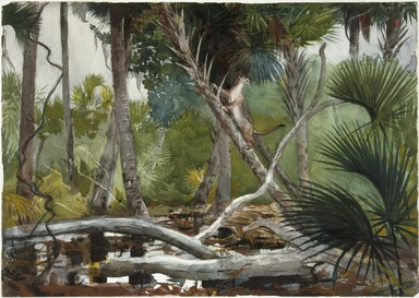 Winslow Homer (American, 1836-1910). In the Jungle, Florida, 1904. Transparent watercolor with touches of opaque watercolor over graphite on off-white, moderately thick, moderately textured wove paper, 13 7/8 x 19 11/16 in. (35.2 x 50 cm). Brooklyn Museum, Museum Collection Fund and Special Subscription, 11.547