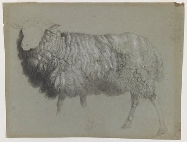 Albert Bierstadt (American, 1830-1902). Study of a Ewe, ca. 1855. Black crayon and red and white chalk on blue-green, medium-weight, slightly textured laid paper., Sheet: 10 9/16 x 14 1/16 in. (26.8 x 35.7 cm). Brooklyn Museum, Purchased with funds given by Mr. and Mrs. Leonard L. Milberg, 1990.101.2