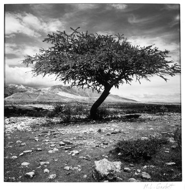 M. Lourdes Grobet (Mexican, born 1940). Untitled (Tree with Yellow Painted Ground), ca. 1986. Silver dye bleach photograph (Cibachrome), image: 7 1/2 x 7 1/2 in. (19.1 x 19.1 cm). Brooklyn Museum, Gift of Marcuse Pfeifer, 1990.119.13. © Maria de Lourdes Grobet
