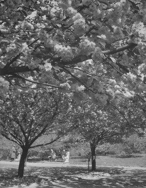 John Albok (American, born Hungary, 1894-1982). Brooklyn Botanic Garden, 1938. Gelatin silver photograph, 11 1/2 x 10 1/2 in. (29.2 x 26.7 cm). Brooklyn Museum, Gift of Ilona Albok Vitarius, 1990.122.15. © Estate of John Albok