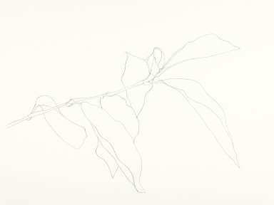 Ellsworth Kelly (American, born 1923). Magnolia, 1986. Graphite on paper, 22 x 28 in. (55.9 x 71.1 cm). Brooklyn Museum, Gift of Henry Persche, 1994.221. © Ellsworth Kelly