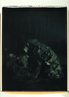 William Wegman (American, born 1943). Man Ray Under Leaves, 1980. Dye diffusion photograph (Polaroid), sheet: 31 1/4 x 22 in. Brooklyn Museum, Gift of Laurie Jewell and Owen Morrell, 1994.224.1. © William Wegman