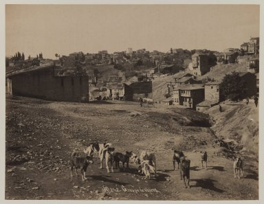 Pascal Sébah (Turkish, 1823-1886). Group of Dogs, ca. 1860-1880. Gelatin silver photograph, sheet: height: 12 in. Brooklyn Museum, Purchased with funds given by Dr. and Mrs. Shahrokh Ahkami and an anonymous donor, 1995.86.11