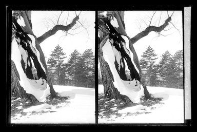 Daniel Berry Austin (American, born 1863, active 1899-1909). Prospect Park, Late Snow, Brooklyn, April 10, 1907. Gelatin silver glass dry plate negative Brooklyn Museum, Brooklyn Museum/Brooklyn Public Library, Brooklyn Collection, 1996.164.1-169