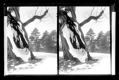 Daniel Berry Austin (American, born 1863, active 1899-1909). Prospect Park, Late Snow, Brooklyn, April 10, 1907. Gelatin silver glass dry plate negative Brooklyn Museum, Brooklyn Museum/Brooklyn Public Library, Brooklyn Collection, 1996.164.1-172