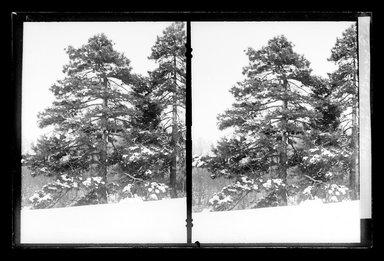 Daniel Berry Austin (American, born 1863, active 1899-1909). Prospect Park, Late Snow, Brooklyn, April 10, 1907. Gelatin silver glass dry plate negative Brooklyn Museum, Brooklyn Museum/Brooklyn Public Library, Brooklyn Collection, 1996.164.1-173