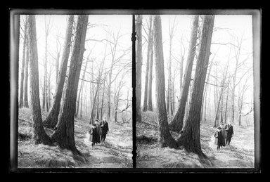 Daniel Berry Austin (American, born 1863, active 1899-1909). Woods at Paerdegat, Flatbush, Brooklyn, ca. 1899-1909. Gelatin silver glass dry plate negative Brooklyn Museum, Brooklyn Museum/Brooklyn Public Library, Brooklyn Collection, 1996.164.1-181