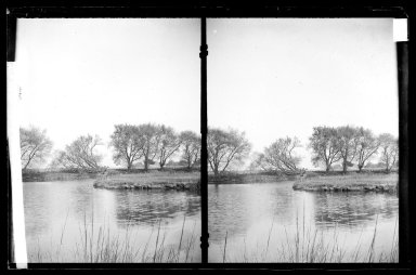 Daniel Berry Austin (American, born 1863, active 1899-1909). Ryder's Pond (Strome Kill), Looking East, Willows, Avenue S and East 32 Street, Gravesend, Brooklyn, ca. 1899-1909. Gelatin silver glass dry plate negative Brooklyn Museum, Brooklyn Museum/Brooklyn Public Library, Brooklyn Collection, 1996.164.1-78