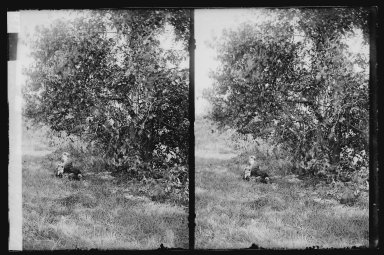 Daniel Berry Austin (American, born 1863, active 1899-1909). Ryder's Pond (Strome Kill), Ralph and Marshall, Hedge and Bitter Sweet, Avenue T and Marsh Street, Brooklyn, ca. 1899-1909. Gelatin silver glass dry plate negative Brooklyn Museum, Brooklyn Museum/Brooklyn Public Library, Brooklyn Collection, 1996.164.1-79