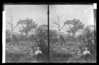 Daniel Berry Austin (American, born 1863, active 1899-1909). Boys and Corn-Stacks, near Bergen Van Wyck House (outside of Frame Lots), Flatlands, Brooklyn, ca. 1899-1909. Gelatin silver glass dry plate negative Brooklyn Museum, Brooklyn Museum/Brooklyn Public Library, Brooklyn Collection, 1996.164.1-84
