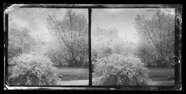George Bradford Brainerd (American, 1845-1887). Pond, Prospect Park, Brooklyn, ca. 1872-1887. Collodion silver glass wet plate negative Brooklyn Museum, Brooklyn Museum/Brooklyn Public Library, Brooklyn Collection, 1996.164.2-1000