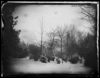 George Bradford Brainerd (American, 1845-1887). Prospect Park, Brooklyn, December 1880. Collodion silver glass wet plate negative Brooklyn Museum, Brooklyn Museum/Brooklyn Public Library, Brooklyn Collection, 1996.164.2-1427