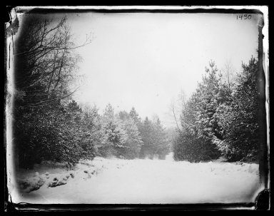 George Bradford Brainerd (American, 1845-1887). Prospect Park, Brooklyn, 1880. Collodion silver glass wet plate negative Brooklyn Museum, Brooklyn Museum/Brooklyn Public Library, Brooklyn Collection, 1996.164.2-1430