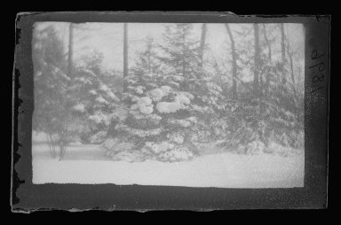 Brooklyn Museum: Snow Trees, Prospect Park, Brooklyn