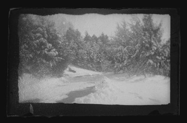 George Bradford Brainerd (American, 1845-1887). Snow Trees, Prospect Park, Brooklyn, 1885. Dry negative plate Brooklyn Museum, Brooklyn Museum/Brooklyn Public Library, Brooklyn Collection, 1996.164.2-1897