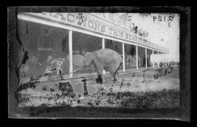George Bradford Brainerd (American, 1845-1887). Elephant, Coney Island, Brooklyn, ca. 1885. Dry negative plate Brooklyn Museum, Brooklyn Museum/Brooklyn Public Library, Brooklyn Collection, 1996.164.2-2129