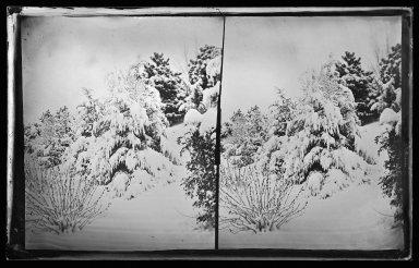 George Bradford Brainerd (American, 1845-1887). Snow Scene, Prospect Park, Brooklyn, ca. 1872-1887. Collodion silver glass wet plate negative Brooklyn Museum, Brooklyn Museum/Brooklyn Public Library, Brooklyn Collection, 1996.164.2-264