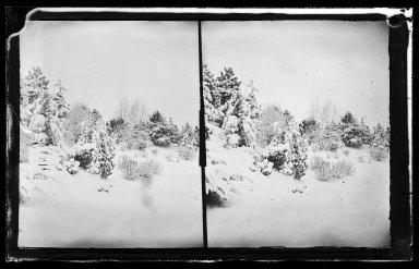 George Bradford Brainerd (American, 1845-1887). Snow Scene, Prospect Park, Brooklyn, ca. 1872-1887. Collodion silver glass wet plate negative Brooklyn Museum, Brooklyn Museum/Brooklyn Public Library, Brooklyn Collection, 1996.164.2-267
