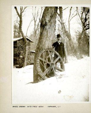 George Bradford Brainerd (American, 1845-1887). Wheel Grown into Tree, Yaphank, Long Island, ca. 1872-1887. Collodion silver glass wet plate negative  Brooklyn Museum, Brooklyn Museum/Brooklyn Public Library, Brooklyn Collection, 1996.164.2-426A