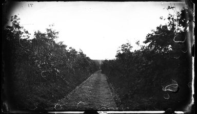 George Bradford Brainerd (American, 1845-1887). Road to Ronkonkoma, ca. 1872-1887. Collodion silver glass wet plate negative Brooklyn Museum, Brooklyn Museum/Brooklyn Public Library, Brooklyn Collection, 1996.164.2-71