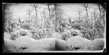 George Bradford Brainerd (American, 1845-1887). Snow Scene, Prospect Park, Brooklyn, ca. 1872-1887. Collodion silver glass wet plate negative Brooklyn Museum, Brooklyn Museum/Brooklyn Public Library, Brooklyn Collection, 1996.164.2-725